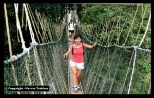 Canopy Walk organised by Nature Trekker