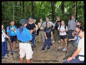 Guide Teaching at Taman Negara1