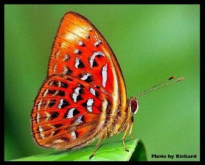 Macro Photography - Butterfly