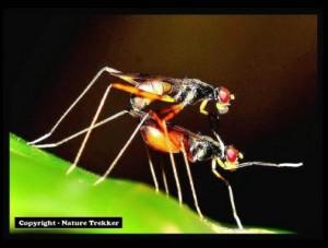 Macro Photography - Fly1