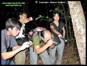 Nature Study Night Exploratory Walk